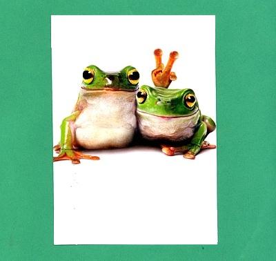 Frog Friends Birthday Card