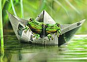 """Life's a Journey"" Frog Friends Card"
