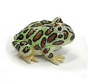"""Pacman"" Mini Porcelain Horned Frog"