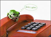 """Miss You"" Frog & Phone Greeting Card"