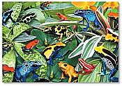 Jungle Frog Blank Notecards, Pack of 8