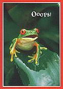 """Ooops!"" Frog Belated Birthday Card"
