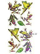 Gold Outlined Rainforest Frog Stickers