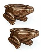 Brass Frog Drawer Pulls, Set/2