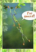 Tree Frog Friendship Card