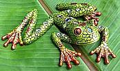 Mosaic Green Frog Wall Climber