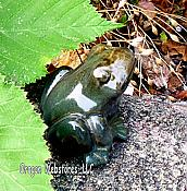 Little Pondering Green Ceramic Frog