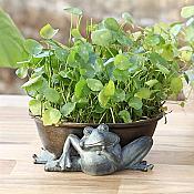 Limber Frog Flowerpot Holder