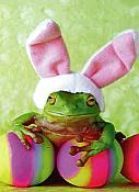 Rabbit Ribbet Frog Easter Card