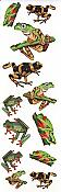 Rainforest Frogs Temporary Tattoos